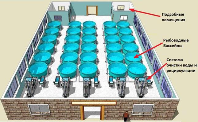 Разведение рыбы в установках закрытого водоснабжения