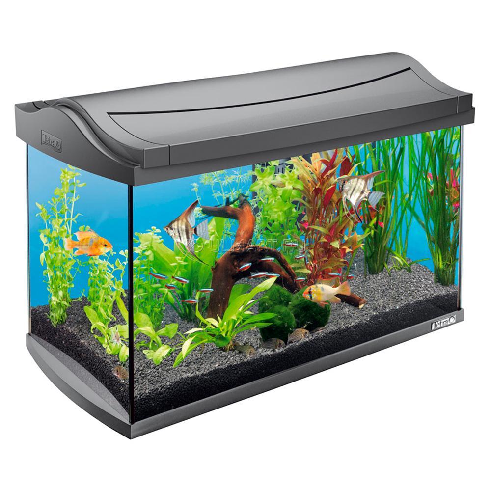 Наполненный аквариум