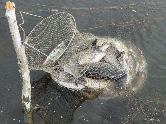 металлический садок для рыбы фото