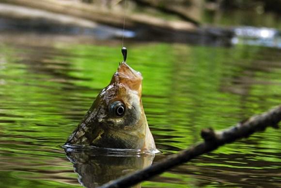 можно ли в дождь ловить рыбу на удочку