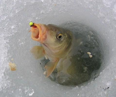 зимняя ловля карпа фото