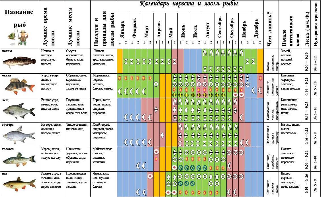Прогноз клева рыбы в чебоксарах и окрестностях