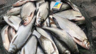 приманки для мирной рыбы