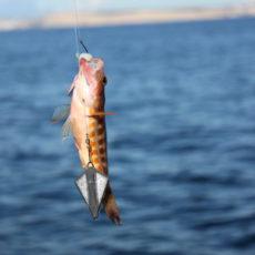 Ловля окуня — секреты удачной рыбалки